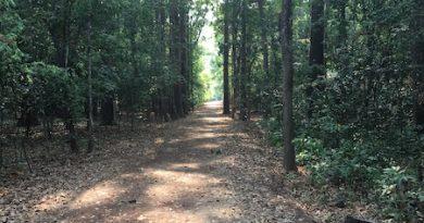 Walking meditation path in northeast Thailand.